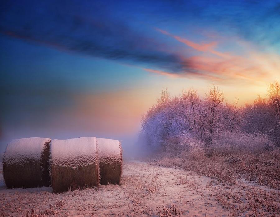 The First Snow by Dan Jurak