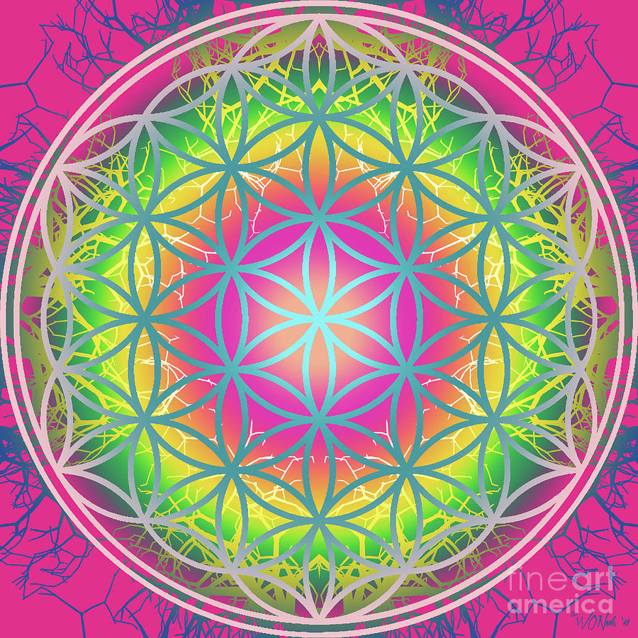 The Flower of Life 8 by Walter Neal