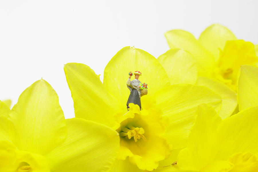 The Flower Lady With Daffodils 1 Photograph