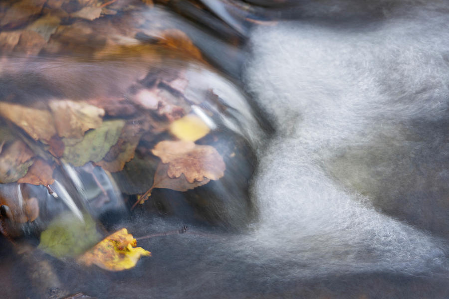 The Flux Of Autumn Photograph