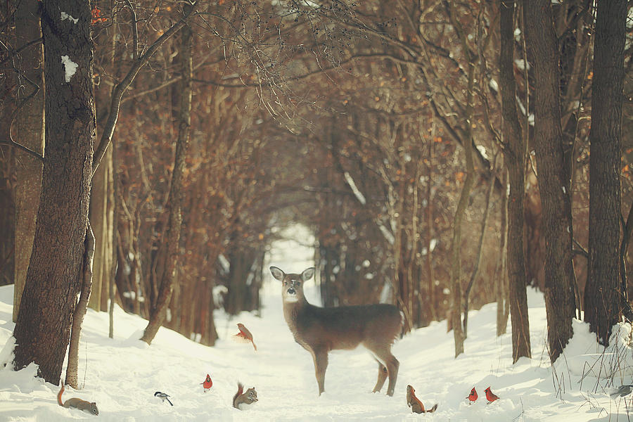 Snow Photograph - The Forest of Snow White by Carrie Ann Grippo-Pike