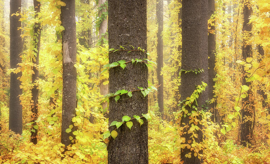 The Forest Was Filled With Yellow by Darylann Leonard Photography