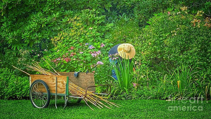 The Gardener Photograph