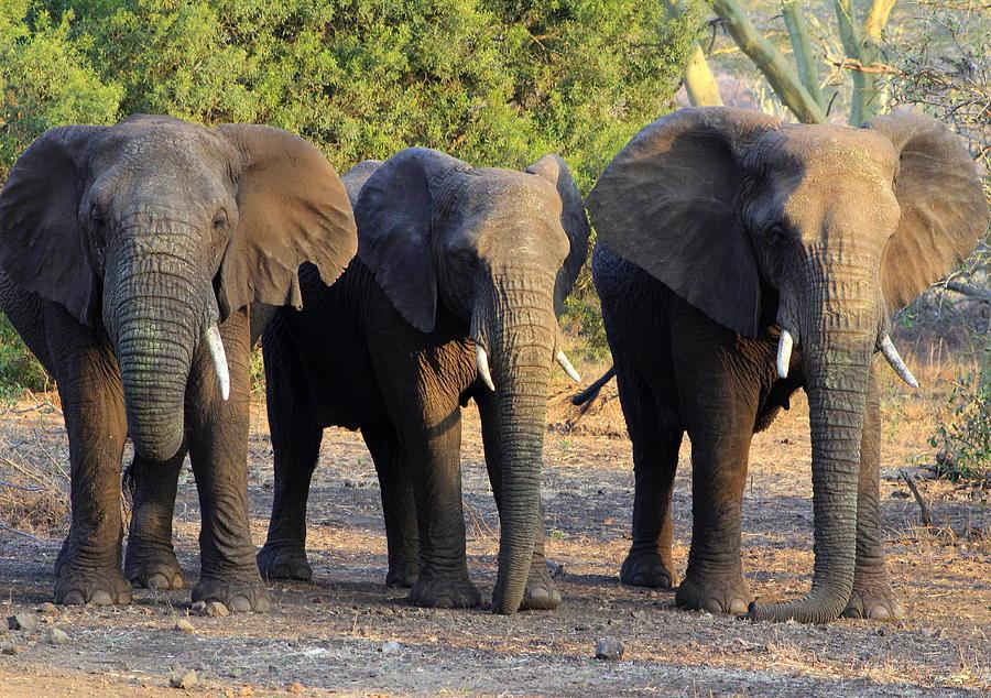 The Golden Girls Of Africa by Fiona Kennard