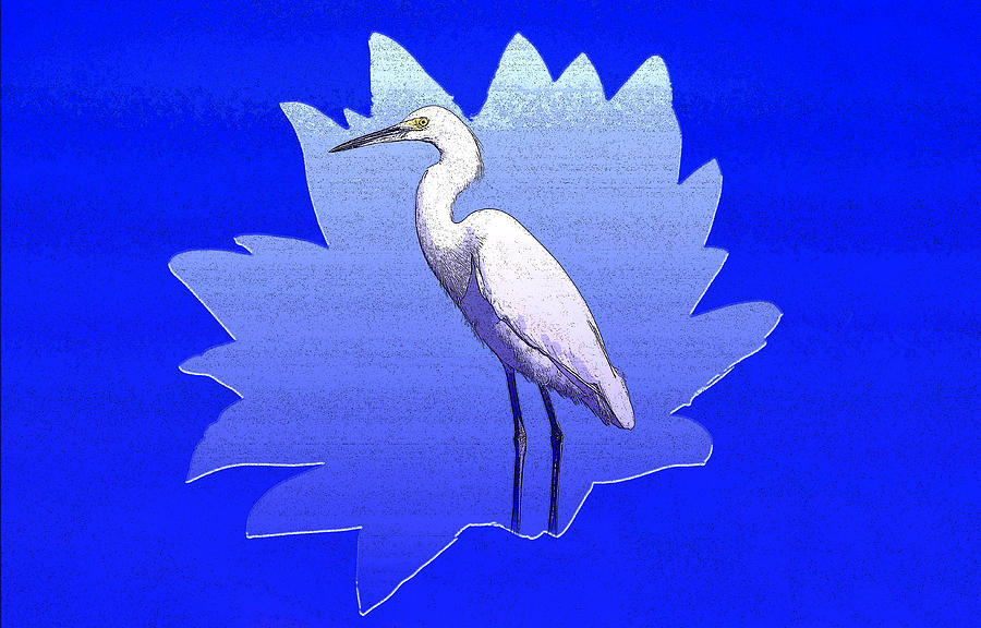 The Great White Egret Mixed Media