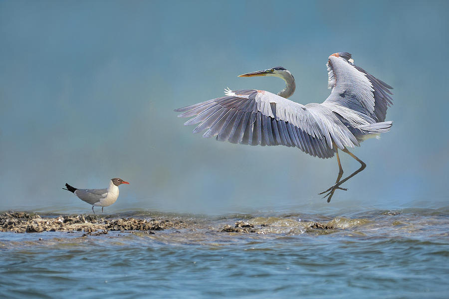 The Heron And The Gull  by HH Photography of Florida