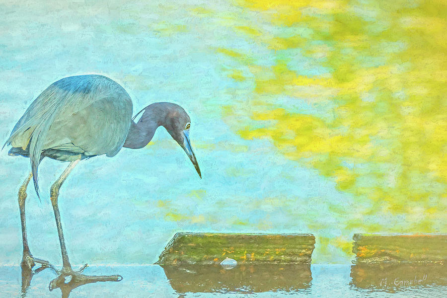 The Hungry Heron by Michael Campbell