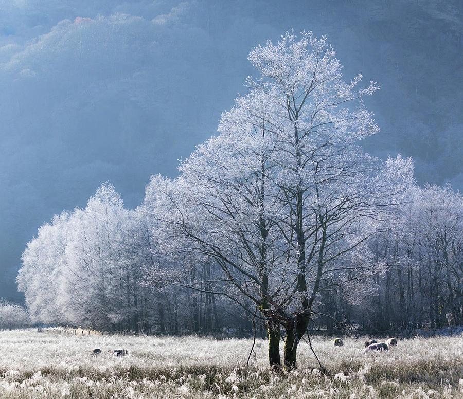 The Ice Dancers by Anita Nicholson