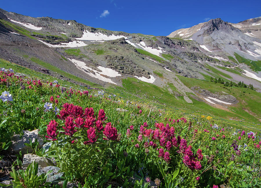The Indian Paintbrush Of Imogene Pass Photograph