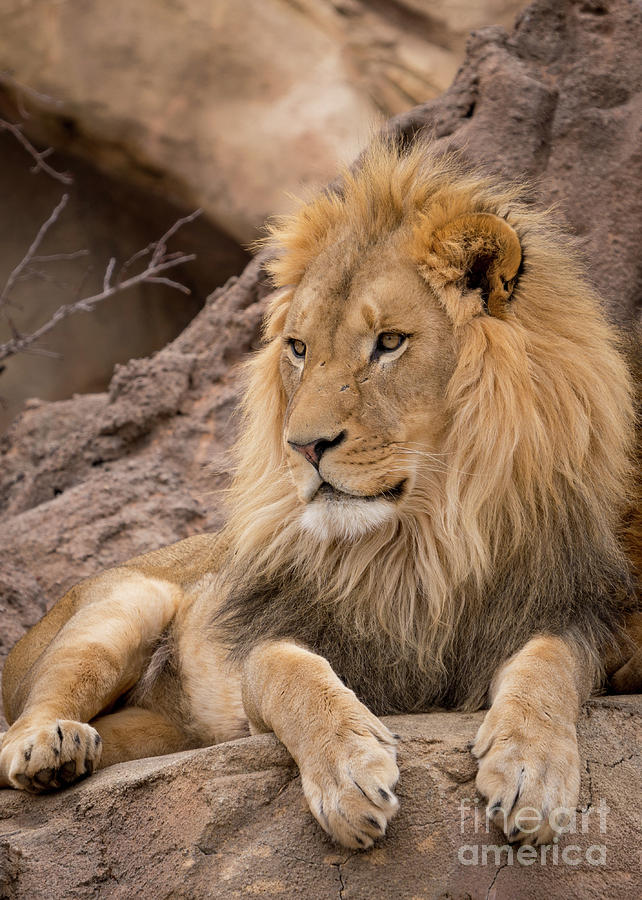 The King by Annerose Walz