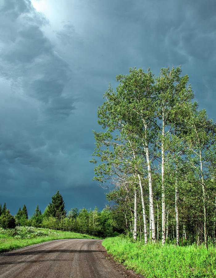 The Light On The Birches, Vertical Photograph