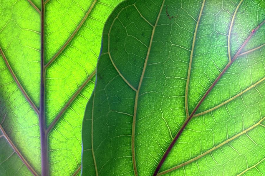 Morning Light On My Plant 2 Photograph