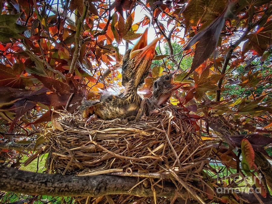 The Nest Photograph