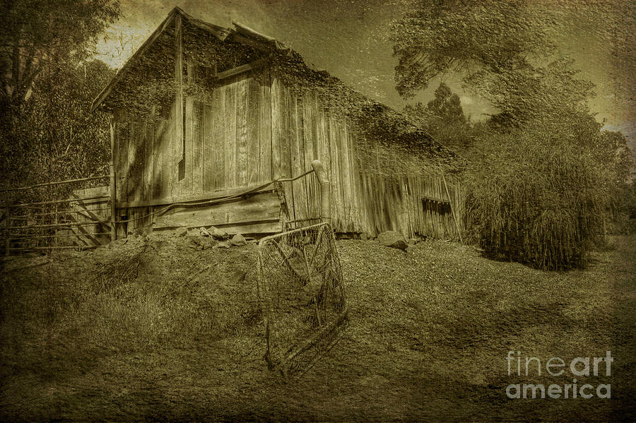 The Old Barn, Bella Vista, Bridgetown, Western Australia by Elaine Teague