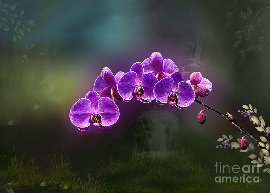 The Orchids of Akaka Falls by J Marielle