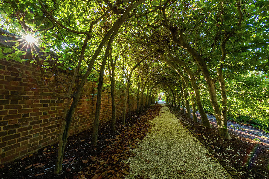 The Palace Arbor In Autumn Photograph
