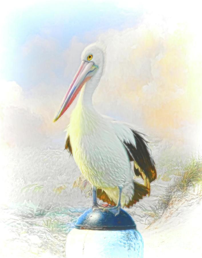 The Pelican Digital Art