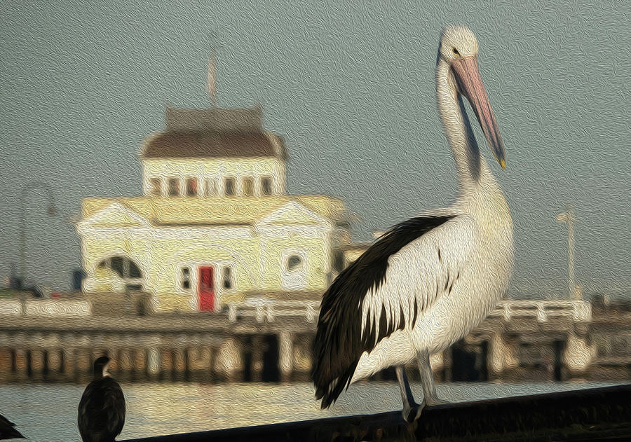 Pelican Photograph - The Pier and the Pelican by Leigh Henningham