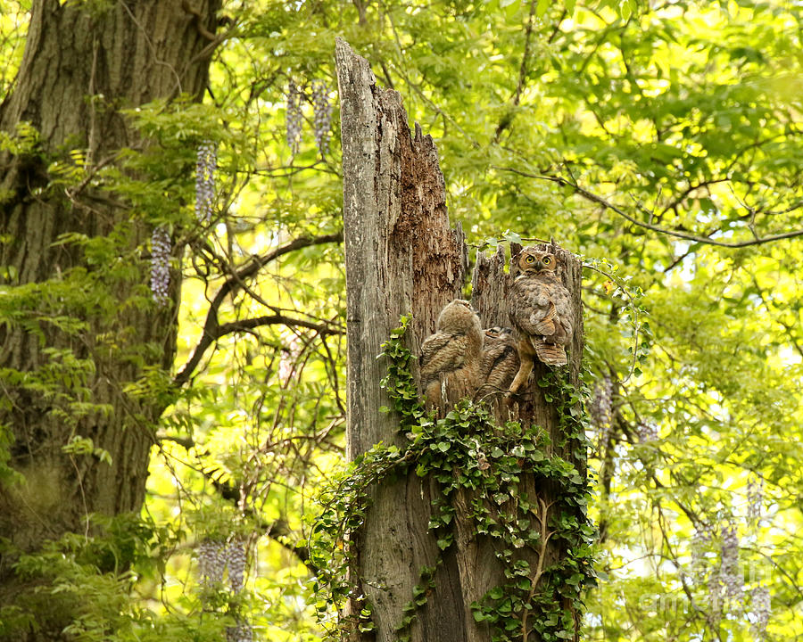 The Prettiest Owl Nest Photograph