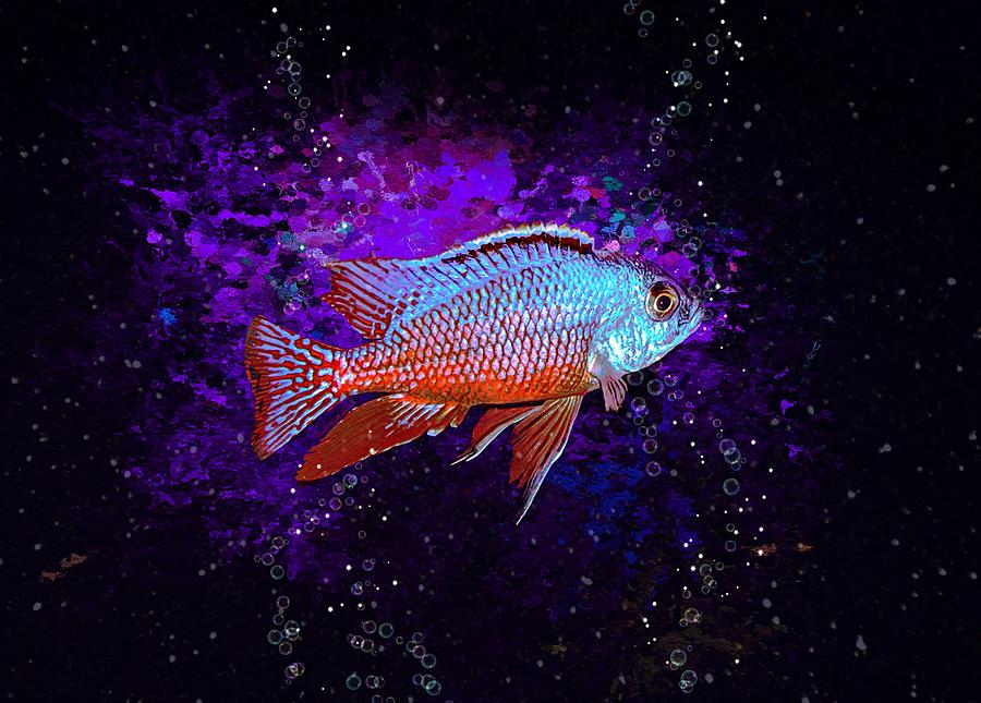 The Red Empress African Cichlid Digital Art