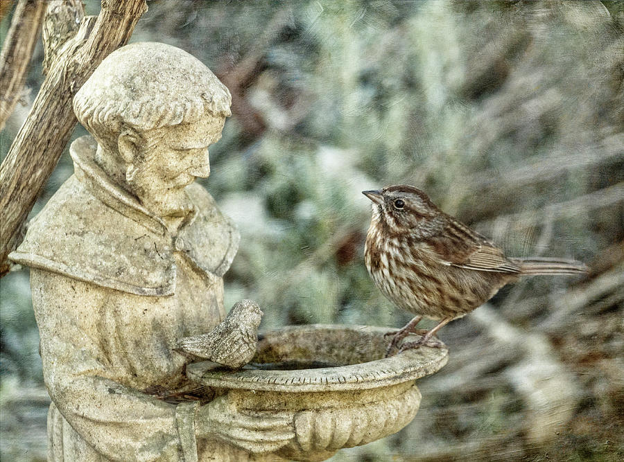 The Saint and the Sparrow by Angie Vogel
