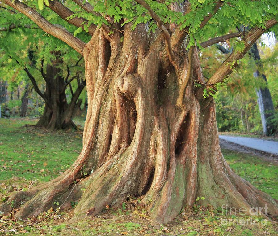 The Screaming Tree by Karen Silvestri