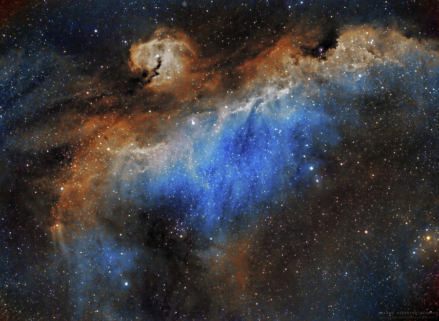 Astronomy Photograph - The Seagull Nebula by Prabhu Astrophotography