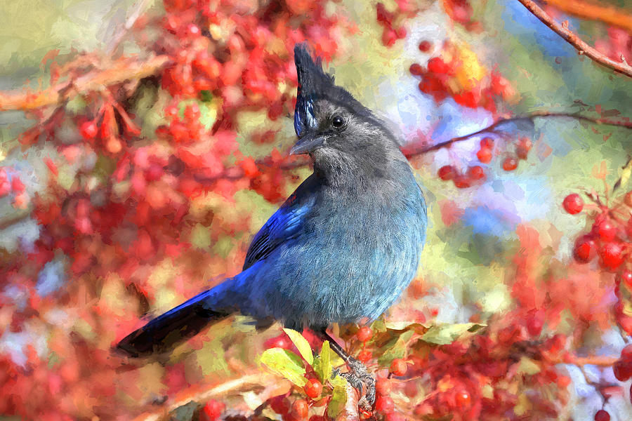 Stellers Jay Photograph - The Shy Poser by Donna Kennedy