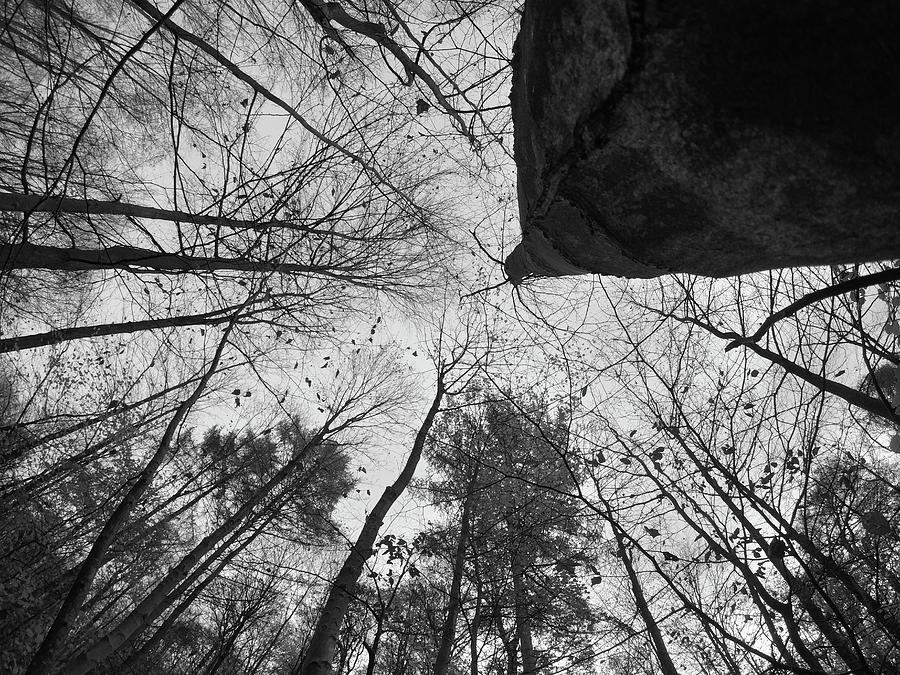 The Silent Forest Photograph