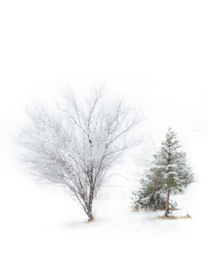 Winter Photograph - The Simply Beauty of Winter by Laura Terriere