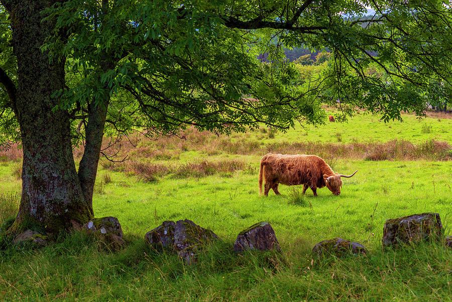 The Spirit Of Scotland Photograph