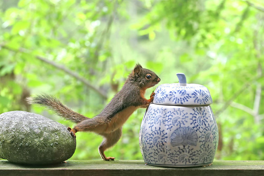 The Squirrel and the Cookie Jar by Peggy Collins