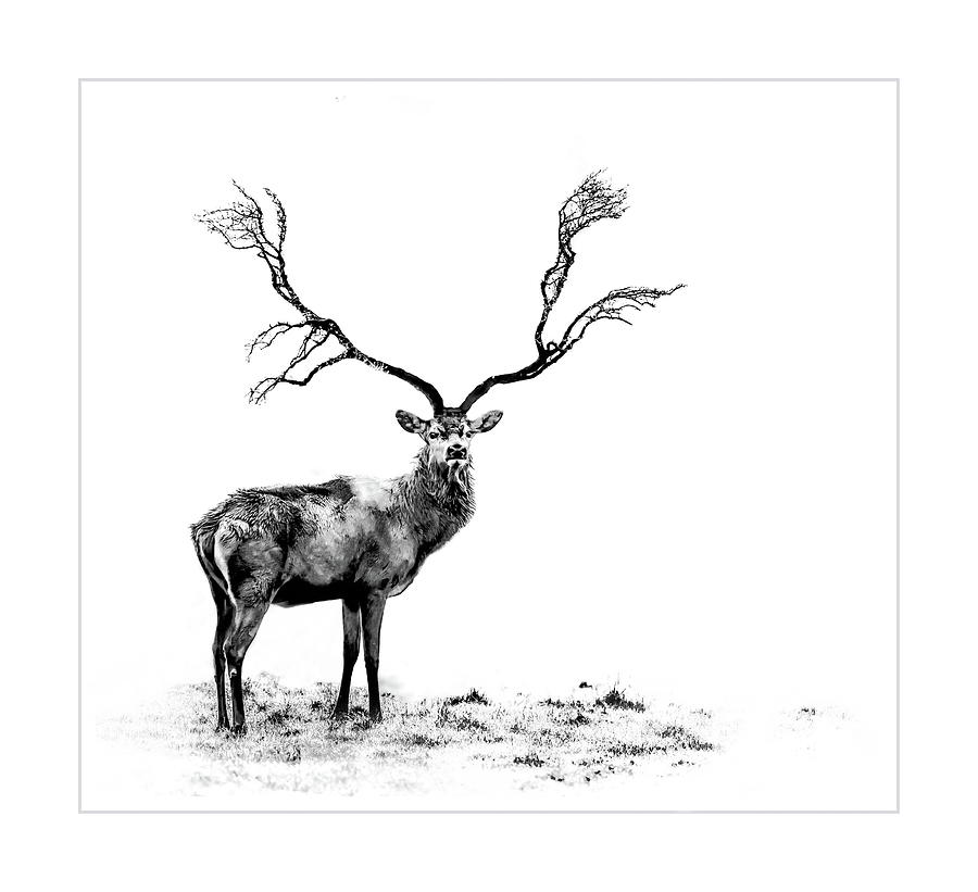 Stage Photograph - The Stag by Andrea Kollo