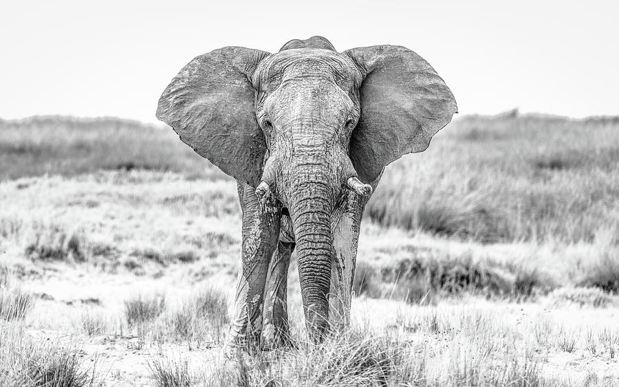 Africa Photograph - The Standoff by Hamish Mitchell