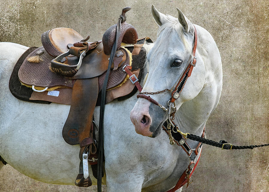 The Steed Photograph