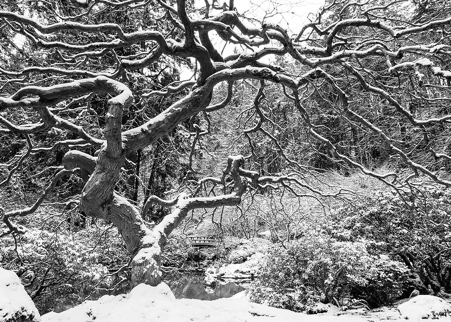 The Tree In Winter Photograph
