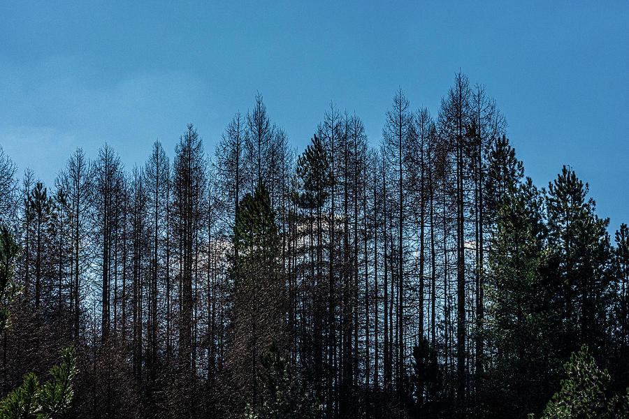 The Tree Line Photograph