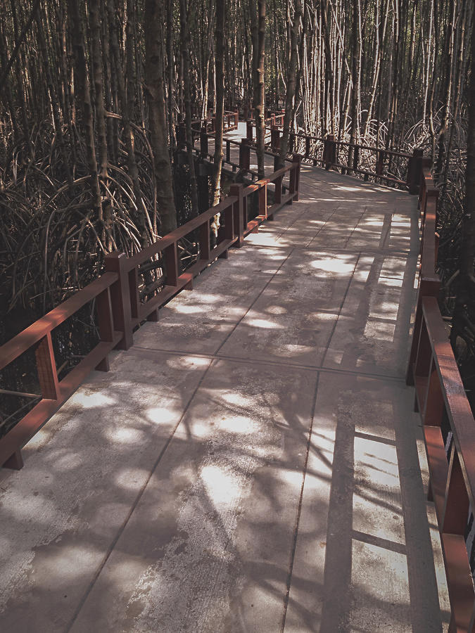 The way in Mangrove forest, Thailand Photograph by Natthapol Bussai
