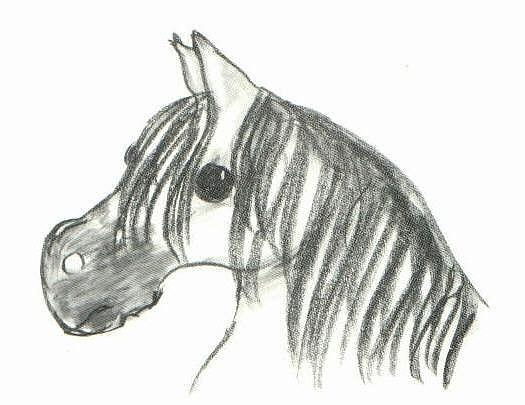 Pony Drawing - The Wild Pony by Lee Pantas
