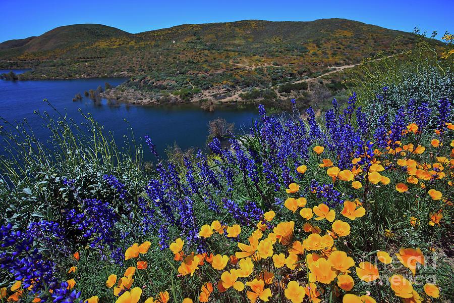 The Wildflowers of Diamond Valley Lake by Sam Antonio Photography