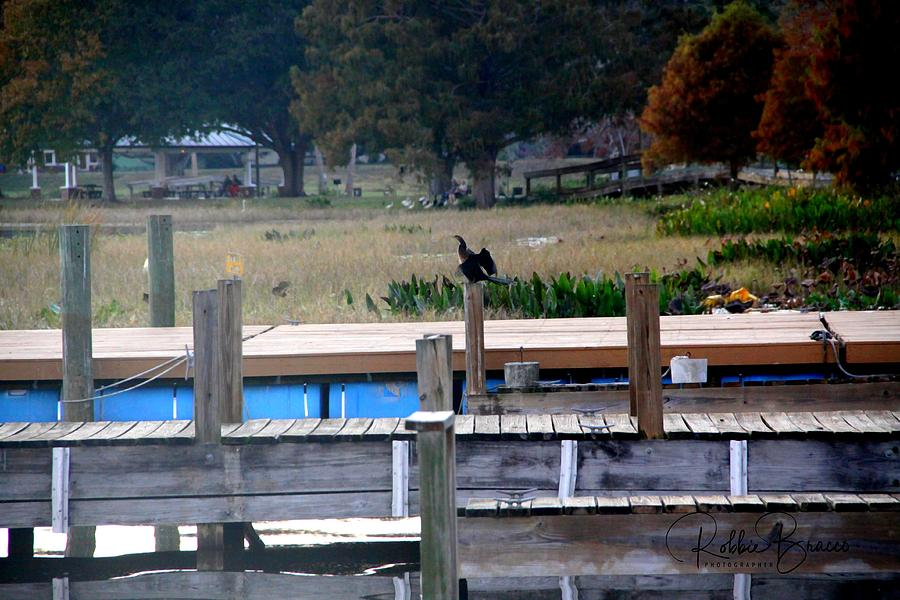 The Wooden Docks at Venetian Gardens,Leesburg, Florida by Philip and Robbie Bracco