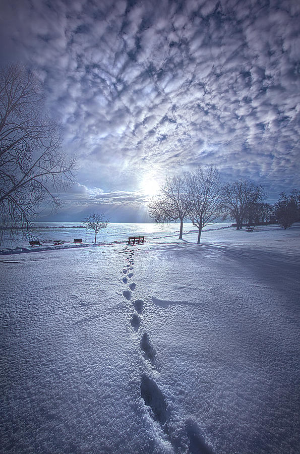 There is Nothing Insignificant by Phil Koch