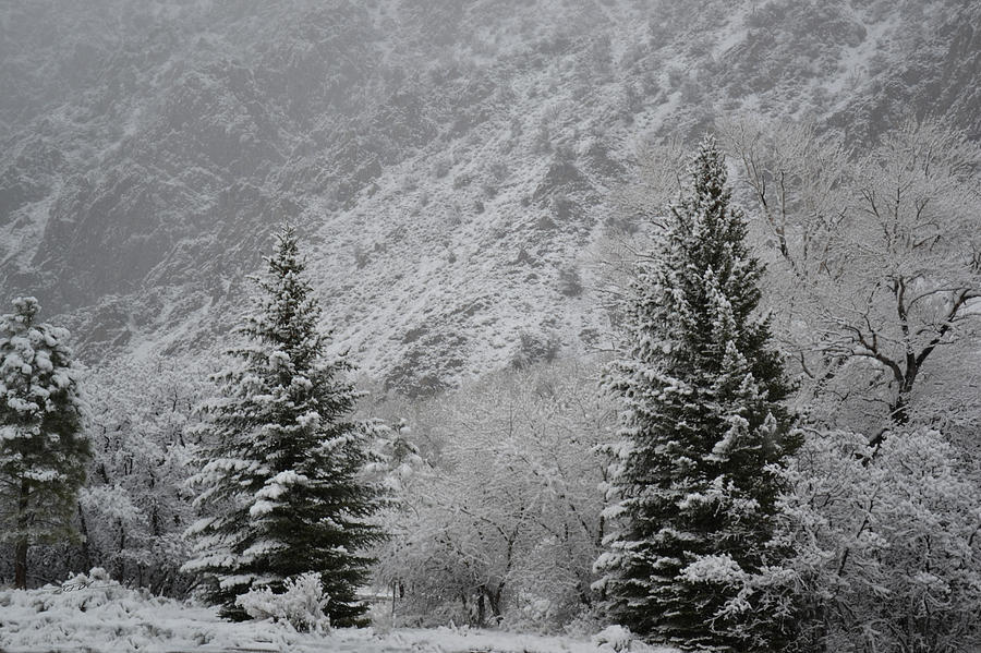 There is Snow on the Trees by RD Erickson