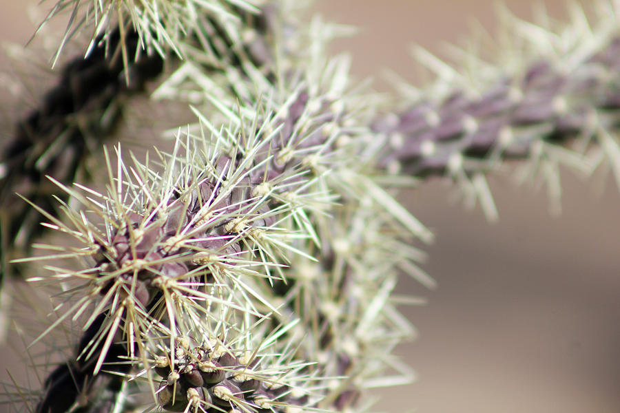 Thorns, Spines, And Prickles Photograph