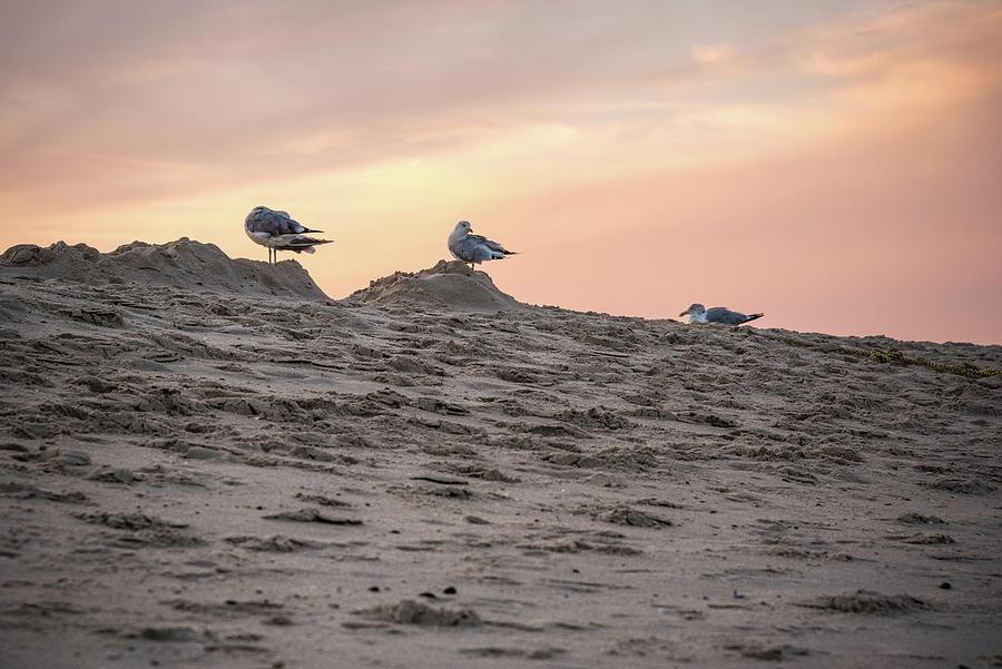 Three Birds Photograph