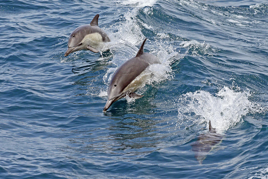 Three Dolphin Stages Photograph