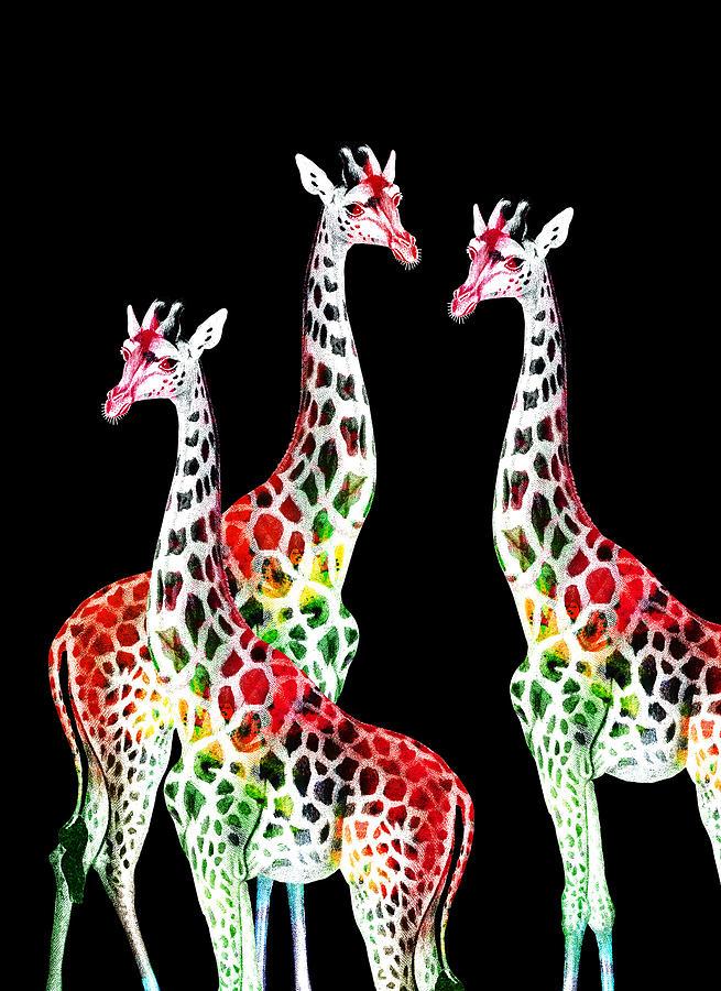 Three Giraffes No Background Digital Art