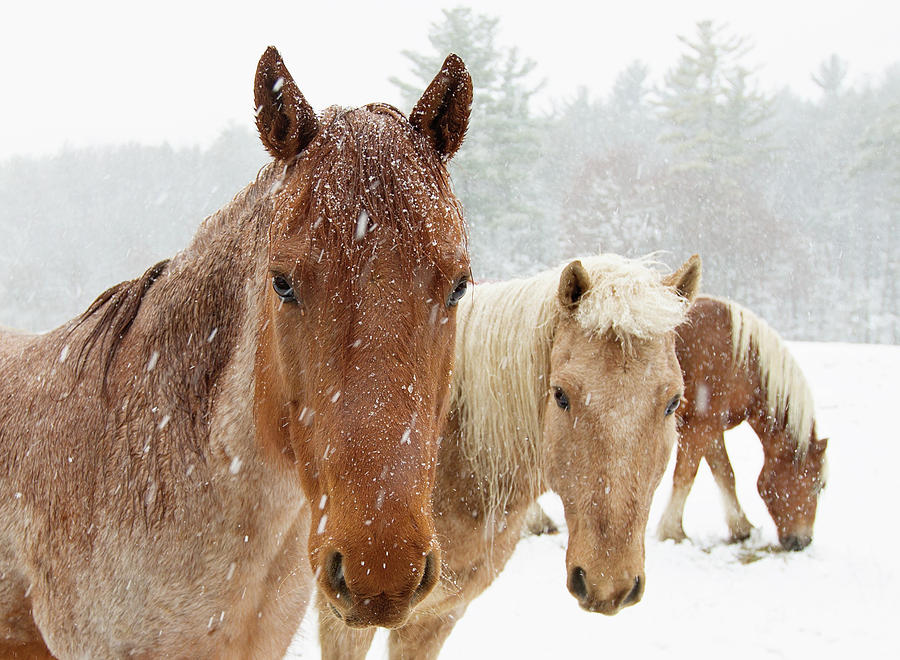 Three Musketeers by Sue Collura