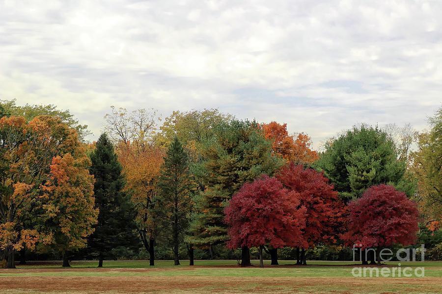 Three Red Maples  by Karen Adams