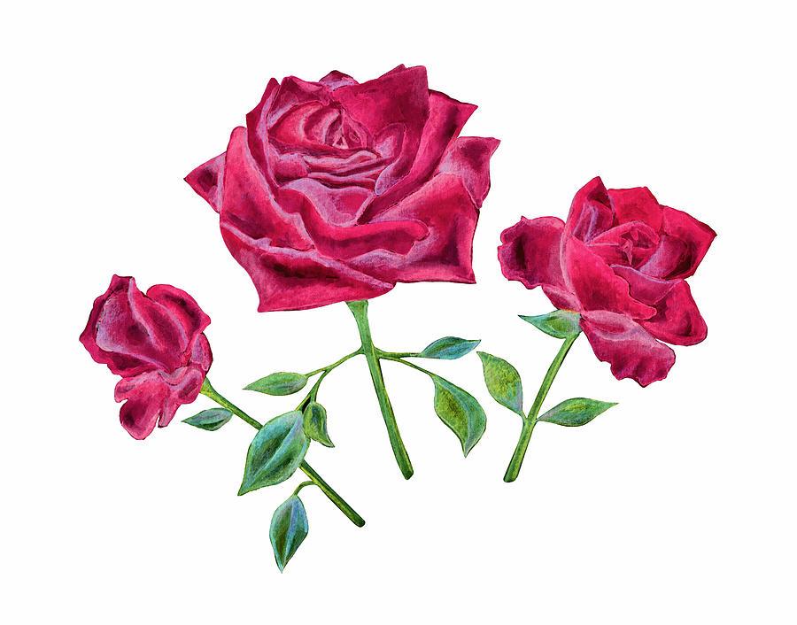 Three Red Roses by Elizabeth Lock